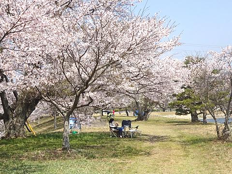 Hanami_h310408_05.jpg