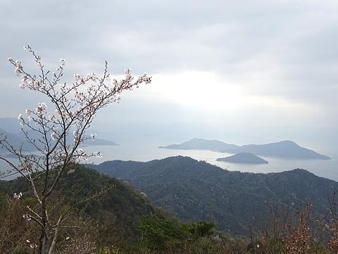 Sakura_h290409_03.jpg