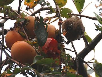 birds_01_s.jpg