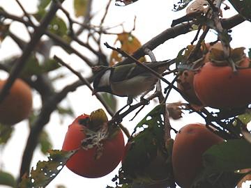 birds_02_s.jpg