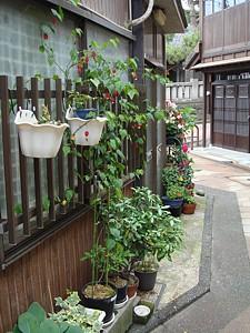 higashichaya_06b_s.jpg