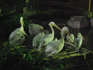 night_zoo_11_s.jpg