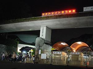 night_zoo_16_s.jpg