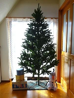tree_h291205_01.jpg