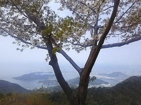 wagaya_hanami_h300405_05.JPG